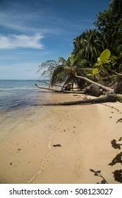 Tropical beach in Bocas del Toro (Panama)