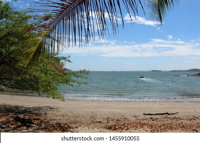 tropical beach with cocnut palms.