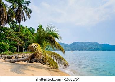 Tropical beach with coconut palm, lake Kivu, Gisenyi, Rwanda