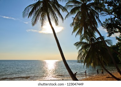 Tropical beach with coconut palm (Moving by wind) on silluate background