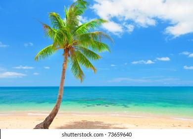 tropical beach with coconut palm on koh Lanta, Thailand
