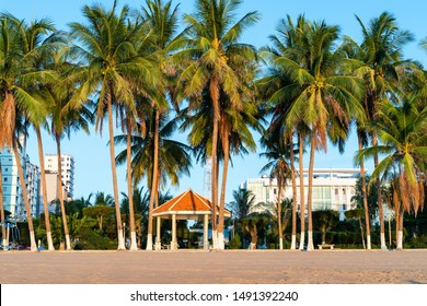 Tropical beach with coconut palm tree in morning sunrise in Nha Trang beach, central Vietnam