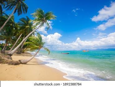 playa tropical con cocoteros