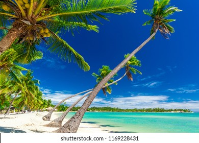Tropical beach with coconut palm trees and clear lagoon on Fiji Islands