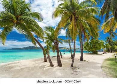 Tropical beach with coconut palm trees and vibrant lagoon on Fiji Islands