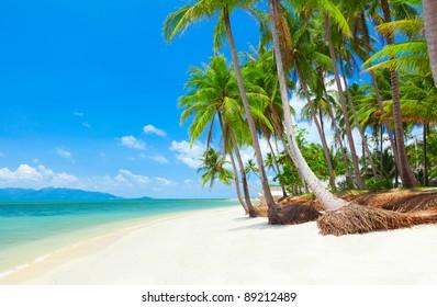 tropical beach with coconut palm trees. Koh Samui, Thailand