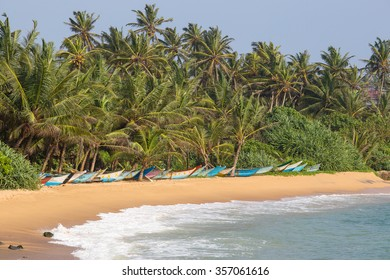 Tropical beach with exotic palm trees and wooden boats on the sand in Mirissa, Sri Lanka