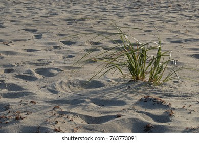 Tropical beach with grasses