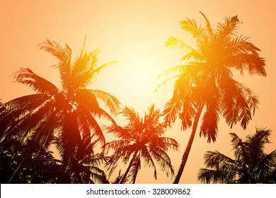 Tropical beach landscape with coconut palm trees at sunset. Paradise design banner background.