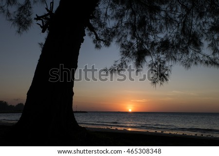 Tropical Beach Landscape Trees Silhouettes During Stock