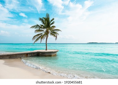 Tropical beach. leaves of palm trees sticking out from the corners of the frame. Palm tree, leaves in front of the blue sea.