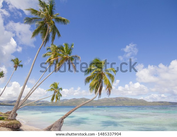 Tropical beach with mountains in the background and palms around in a  sunny vacation day at Caribbean island.