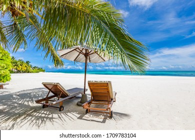 Tropical beach nature as summer landscape with lounge chairs and palm trees and calm sea for beach banner. Luxurious travel landscape, beautiful destination for vacation or holiday. Beach scene