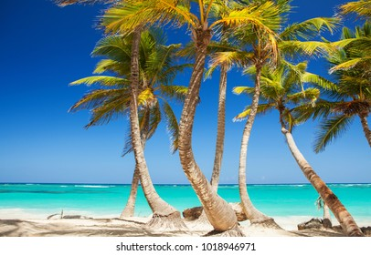 Tropical beach. Ocean and palmtrees background. White sand and crystal-blue sea. Ocean water nature, beach relax. Summer sea vacation. Caribbean beach background