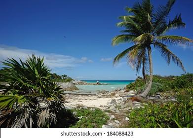 Tropical beach on the Caribbean sea