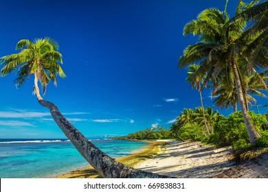 Tropical beach on south side of Samoa Island with many palm trees
