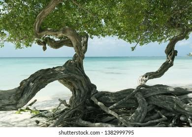 Tropical beach Oranjestad Aruba Dutch caribbean