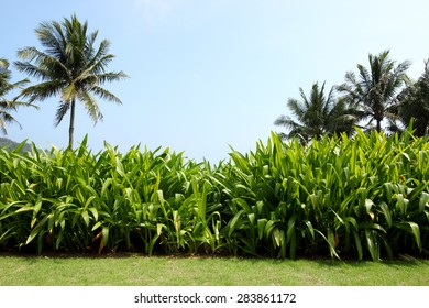 tropical beach and palm tree leafs background -- Idyllic tropical scenery