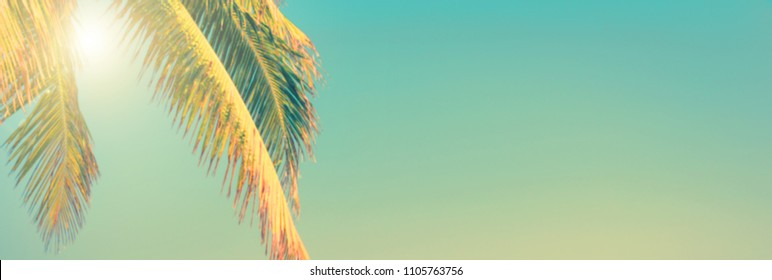 Tropical beach and palm tree panoramic background, sunny sky, vintage summer concept with copy space