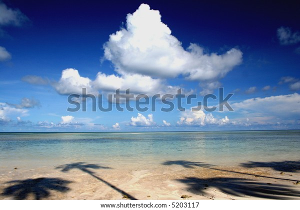 tropical beach with palm tree shadow
