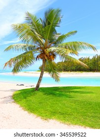 Tropical beach and palm trees with coconuts, blue sea and sunny sky on a background.  Ile Aux Cerfs Island ( Mauritius Island) on Indian Ocean.