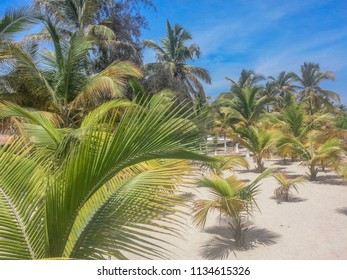 tropical beach with palm trees, sand and blue sky, located on the island of Mussulo in Luanda, Angola