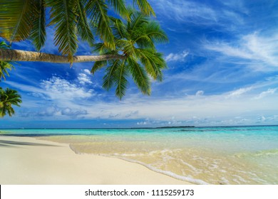 Tropical beach with palm trees in summer