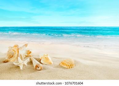Tropical beach. Shells on the sand.