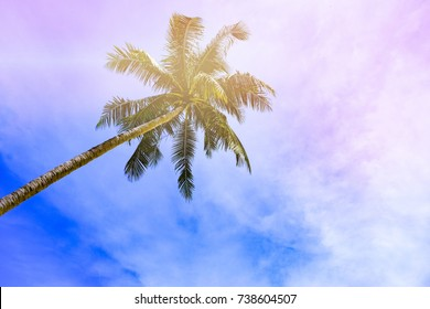 Tropical beach and sky background with tree border.