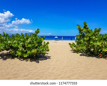 Tropical Beach in Sosua, Playa Alicia