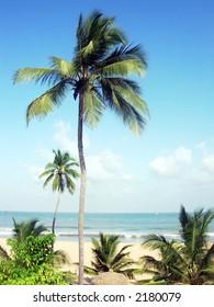 A tropical beach in srilanka