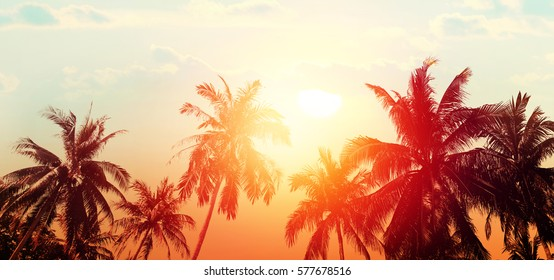 Tropical beach summer background with palm trees silhouette at sunset. Bokeh effect. Panorama