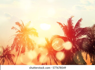 Tropical beach summer background with palm trees silhouette at sunset. Bokeh effect.