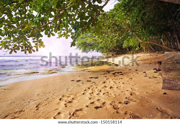 Tropical beach at sunset with lush vegetation, Caribbean, Manzanillo, Costa Rica
