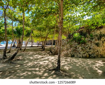 Tropical Beach with trees