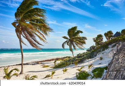 Tropical beach of Tulum in Mexico / Untouched paradise under marvelous coconut trees / Summer vacation in caribbeans