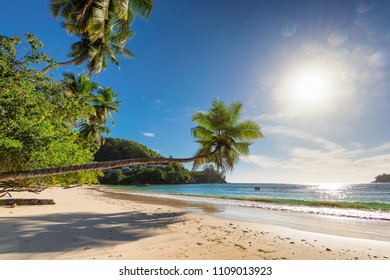 Tropical beach. View of Paradise beach with palms on Seychelles. Summer beaches and vacation concept background.