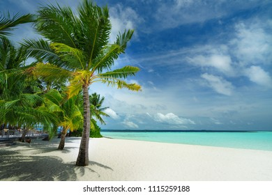 Tropical beach with white sand and coconut palms