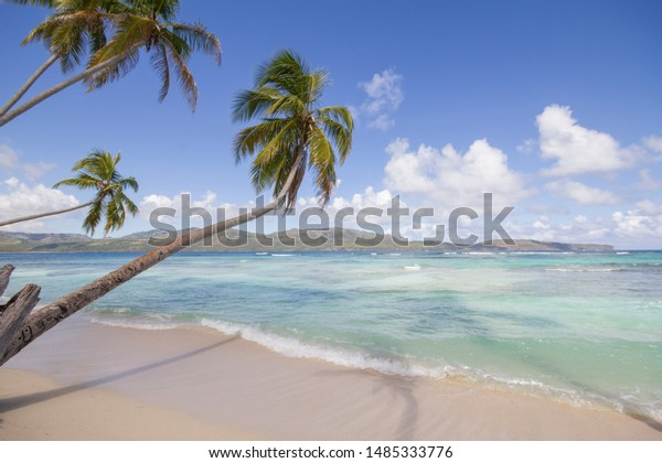Tropical beach with white sand and palm trees in Caribbean paradise with great sunny weather.