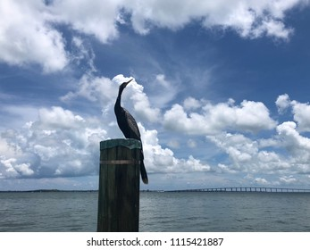 Tropical bird on dock post with Key Biscayne Bridge in background