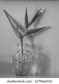 Tropical Bird of Paradise in a Crystal Vase.  Black and white photo for use as an ad cover.