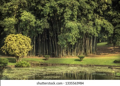 Tropical botanic garden with bamboo scenery with landscape design in Royal Garden Peradeniya in Sri Lanka nearby Kandy surroundings