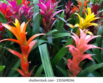 Tropical bromeliad flowers