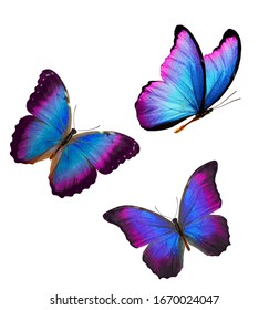 tropical butterflies with blue wings with purple isolated on white background