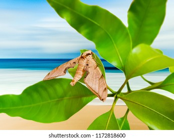 Tropical butterfly in army look