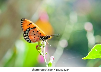 tropical butterfly background