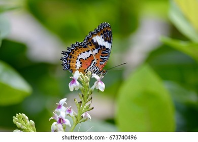 A tropical butterfly collecting nectar sitting on a flower captured at the famous Butterfly Park in Bali, Indonesia.