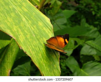 Tropical Butterfly in NATURE