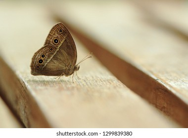 Tropical butterfly on bench