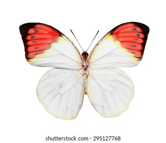 Tropical butterfly on white